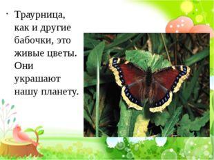 Траурница, как и другие бабочки, это живые цветы. Они украшают нашу планету.