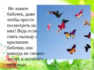 Не ловите бабочек, даже чтобы просто посмотреть на них! Ведь если снять пыль