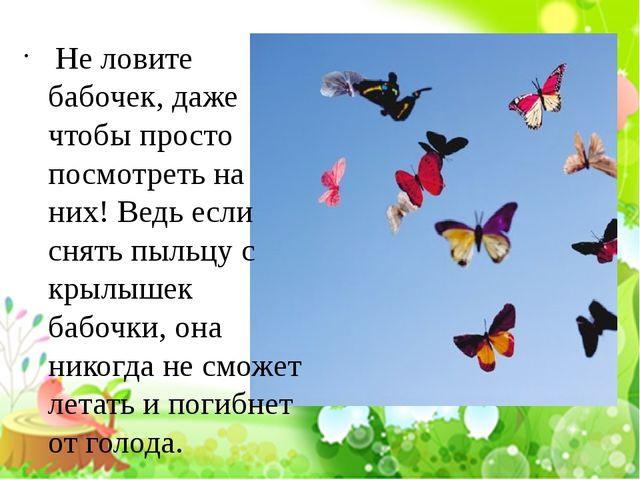Не ловите бабочек, даже чтобы просто посмотреть на них! Ведь если снять пыль...