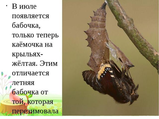 В июле появляется бабочка, только теперь каёмочка на крыльях-жёлтая. Этим от...