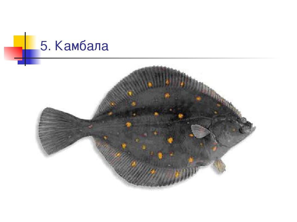 5. Камбала