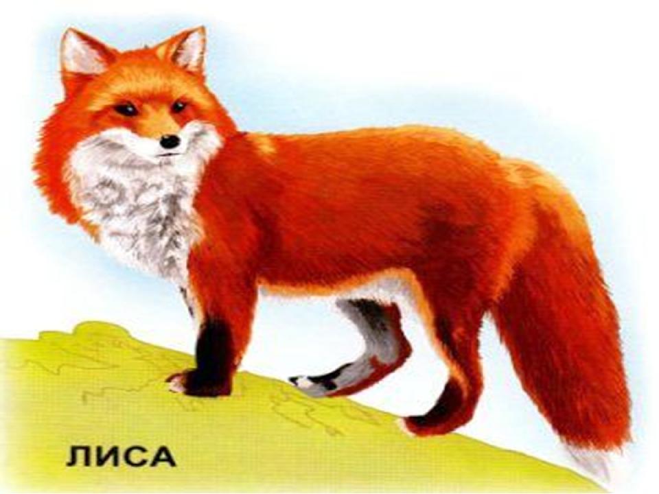 Картинки детям дикие животные лиса