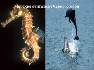 Морские обитатели Черного моря