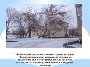Возле нашей школы со стороны 22 дома по улице Электровозная растут деревья, о