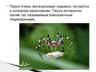 Пауки очень прожорливые хищники, питаются в основном насекомыми. Пауки интере