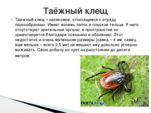 Таежный клещ – насекомое, относящееся к отряду паукообразных. Имеет восемь ла