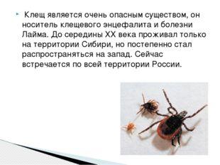 Клещ является очень опасным существом, он носитель клещевого энцефалита и бо