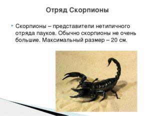 Скорпионы – представители нетипичного отряда пауков. Обычно скорпионы не очен