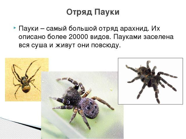 Пауки – самый большой отряд арахнид. Их описано более 20000 видов. Пауками за...