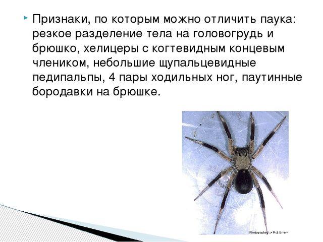 Признаки, по которым можно отличить паука: резкое разделение тела на головогр...