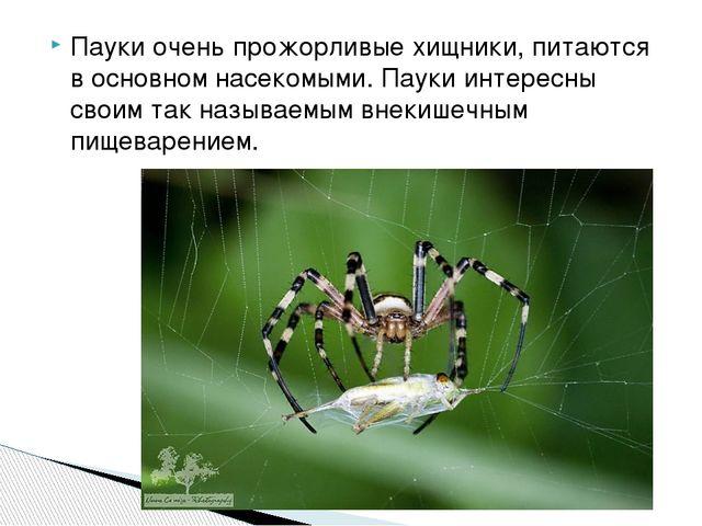 Пауки очень прожорливые хищники, питаются в основном насекомыми. Пауки интере...