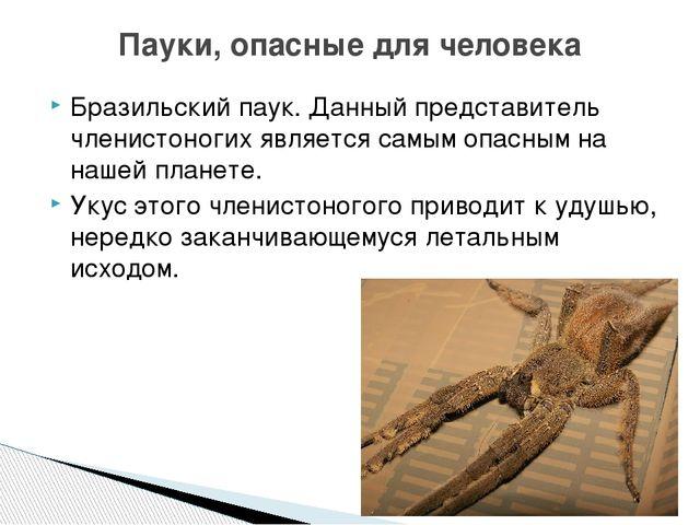 Бразильский паук. Данный представитель членистоногих является самым опасным н...