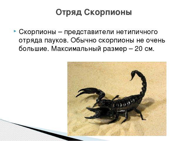 Скорпионы – представители нетипичного отряда пауков. Обычно скорпионы не очен...
