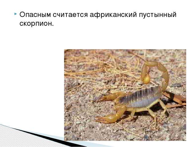 Опасным считается африканский пустынный скорпион.