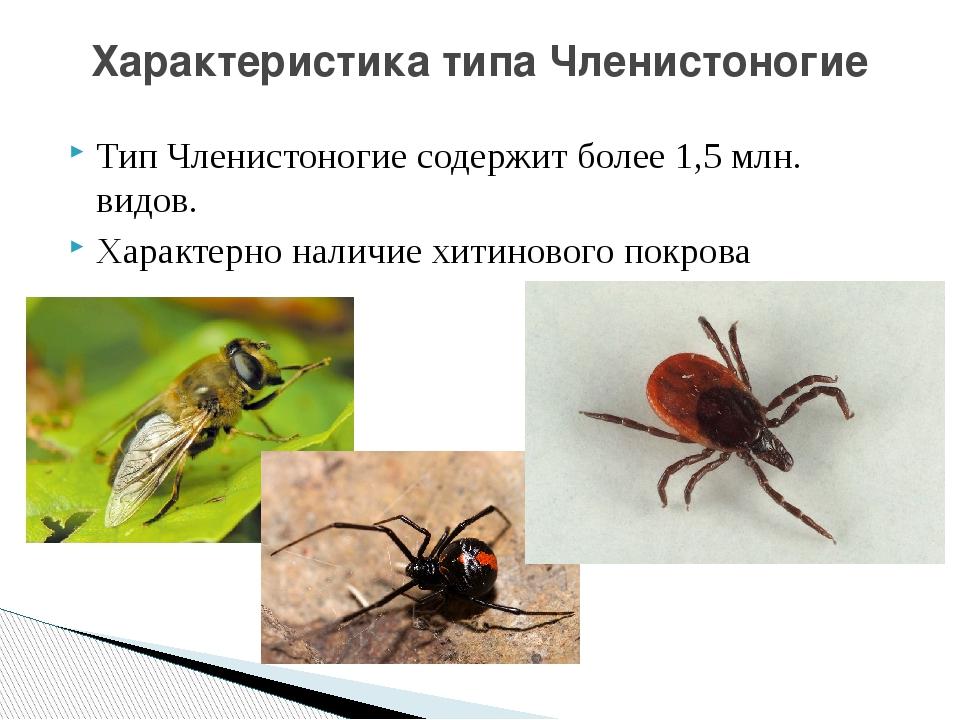Тип Членистоногие содержит более 1,5 млн. видов. Характерно наличие хитиновог...