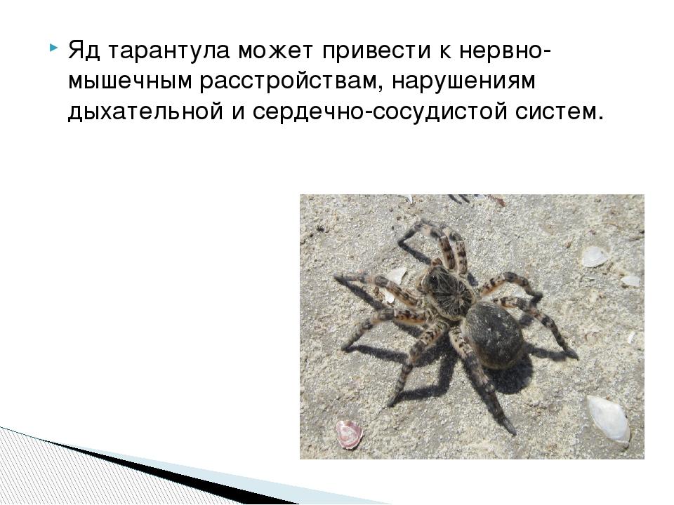 Яд тарантула может привести к нервно-мышечным расстройствам, нарушениям дыхат...