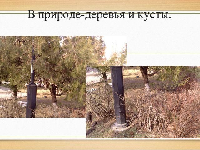 В природе-деревья и кусты.