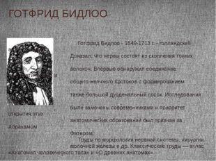 ГОТФРИД БИДЛОО Готфрид Бидлоо - 1649-1713 г. - голландский анатом, хирург. До