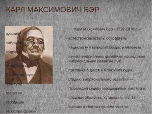 КАРЛ МАКСИМОВИЧ БЭР Карл Максимович Бэр - 1792-1876 г. – русский естествоиспы