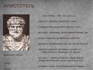 Аристотель – 384 - 322 до н.э., древнегреческий ученый и филсов. Аристотель