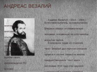 АНДРЕАС ВЕЗАЛИЙ Андреас Везалий – 1514 – 1564 г. Естествоиспытатель, основопо
