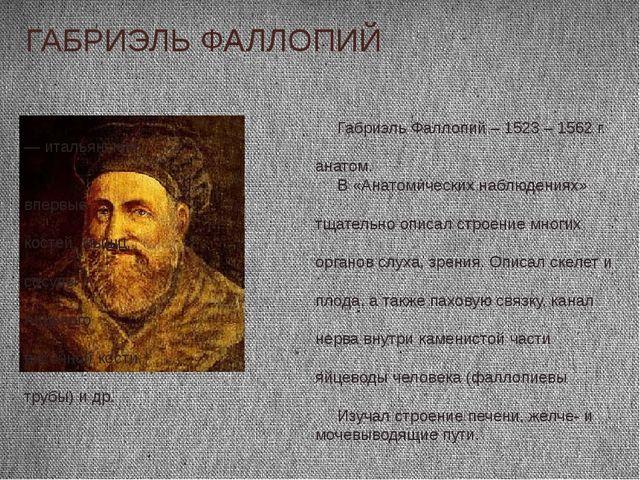 Габриэль Фаллопий – 1523 – 1562 г. — итальянский анатом. В «Анатомических на...