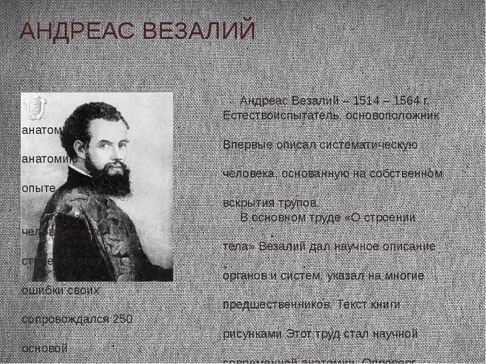 АНДРЕАС ВЕЗАЛИЙ Андреас Везалий – 1514 – 1564 г. Естествоиспытатель, основопо...