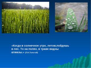 «Когда в солнечное утро, летом,пойдешь в лес. То на полях, в траве видны алма