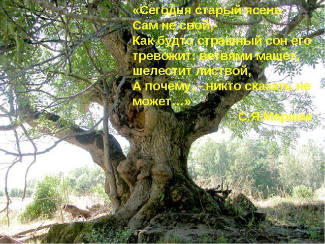 «Сегодня старый ясень Сам не свой,- Как будто страшный сон его тревожит: ветв...