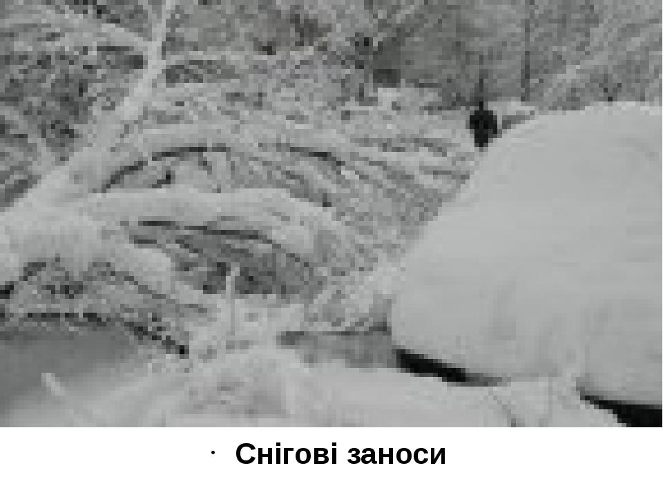 Снігові заноси