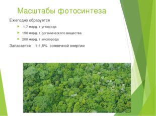 Масштабы фотосинтеза Ежегодно образуется 1,7 млрд. т углерода 150 млрд. т орг