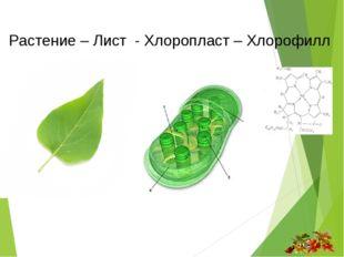 Растение – Лист - Хлоропласт – Хлорофилл