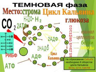 6 5 4 7 8 9 10 11 12 13 3 1 2 На образование С6Н12О6 необходимо 6 оборотов ци