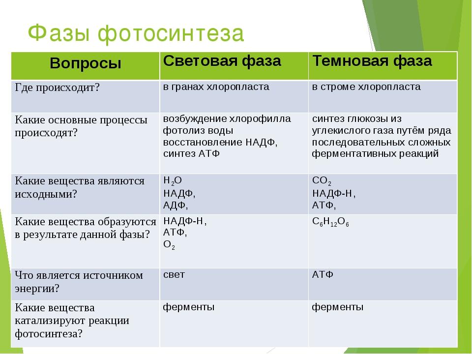 Фазы фотосинтеза ВопросыСветовая фазаТемновая фаза Где происходит?в гранах...