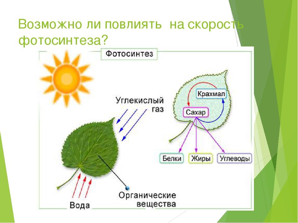 Возможно ли повлиять на скорость фотосинтеза?