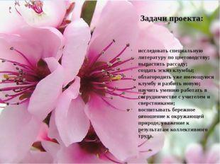 исследовать специальную литературу по цветоводству; вырастить рассаду; созда