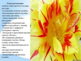 План реализации: -выбор семян цветов и посадка рассады; -составление эскизов
