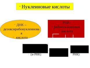 Нуклеиновые кислоты ДНК – дезоксирибонуклеиновая кислота РНК- рибонуклеиновая