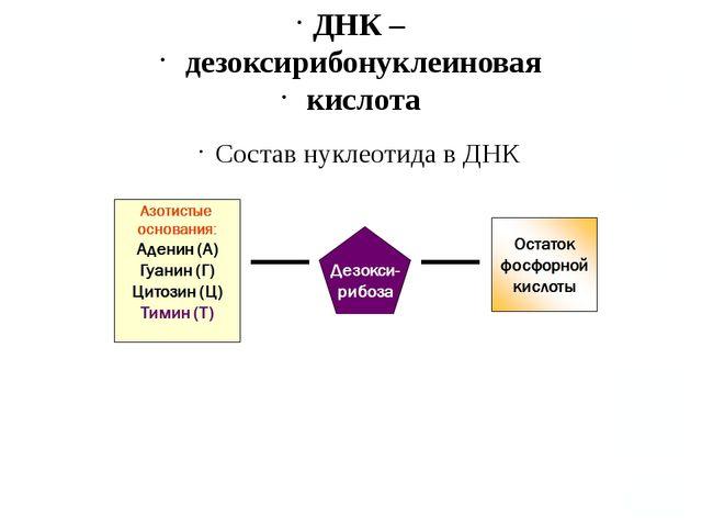 ДНК – дезоксирибонуклеиновая кислота Состав нуклеотида в ДНК