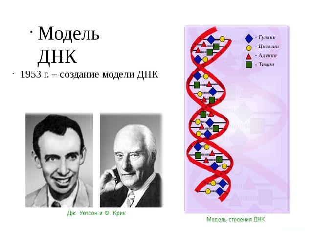 Модель ДНК 1953 г. – создание модели ДНК