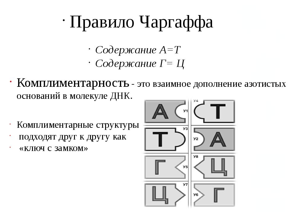Правило Чаргаффа Содержание А=Т Содержание Г= Ц Комплиментарность - это взаим...