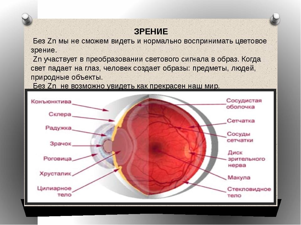 ЗРЕНИЕ Без Zn мы не сможем видеть и нормально воспринимать цветовое зрение. Z...
