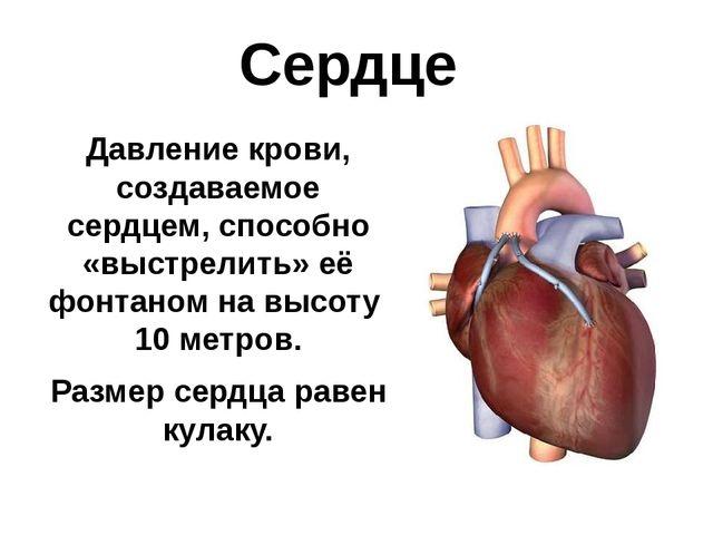 Сердце Давление крови, создаваемое сердцем, способно «выстрелить» её фонтаном...