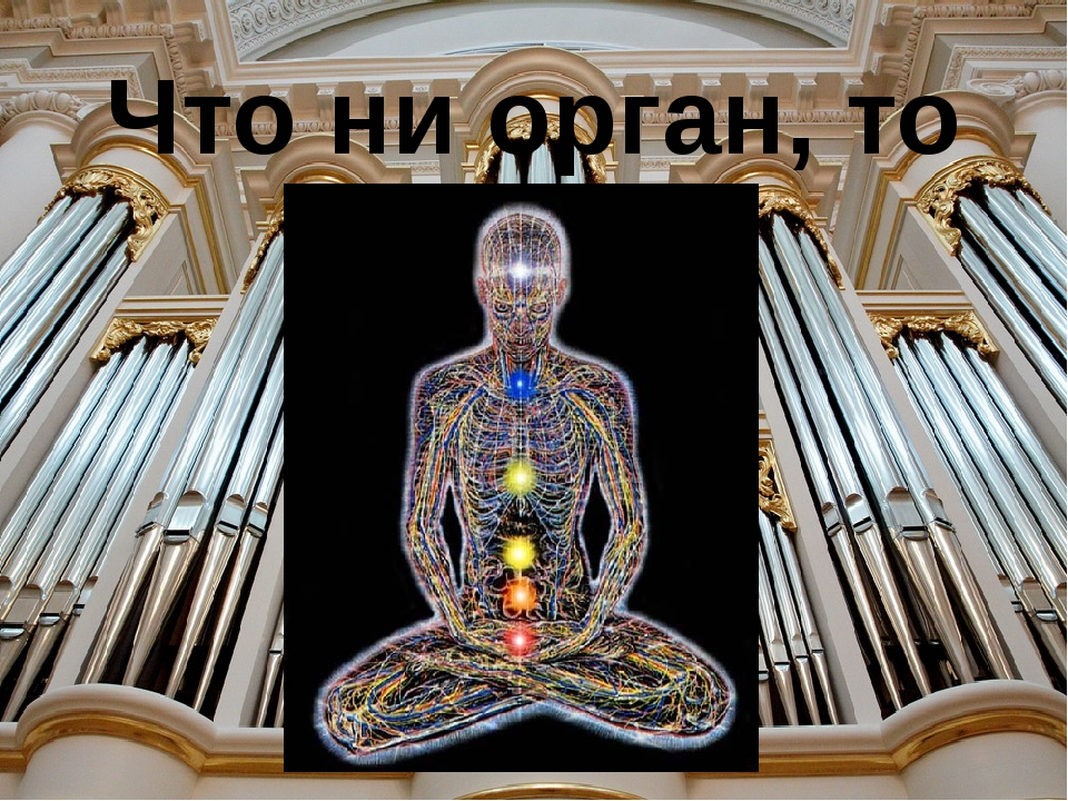 Что ни орган, то орган