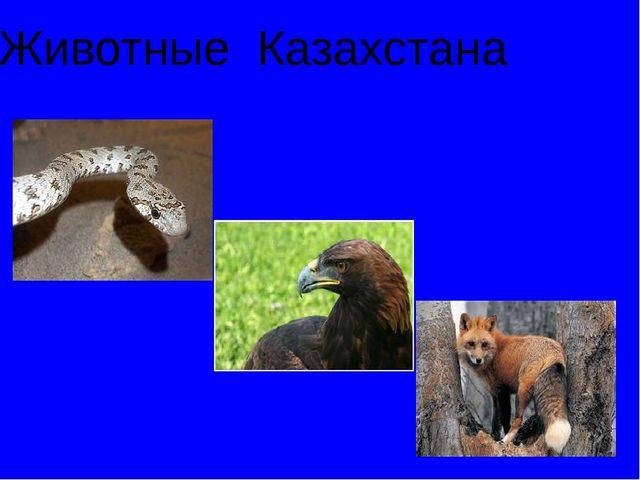 Животные Казахстана