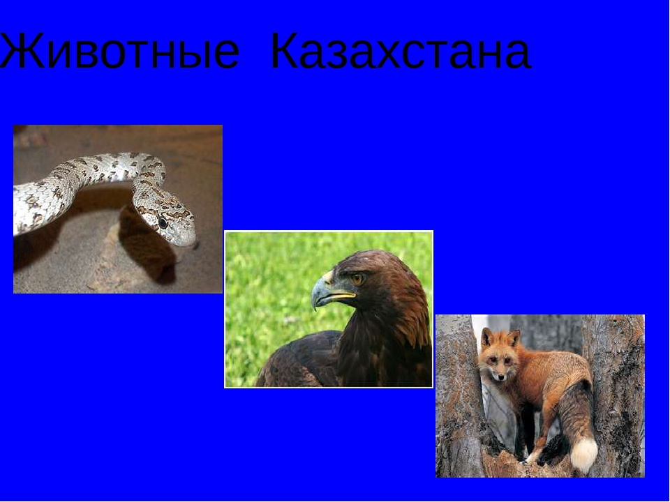 Промысловые животные и птицы обитающие территории