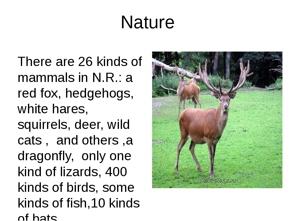 Nature There are 26 kinds of mammals in N.R.: a red fox, hedgehogs, white har...