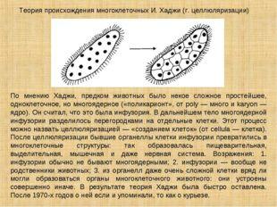 Теория происхождения многоклеточных И. Хаджи (г. целлюляризации) По мнению Ха