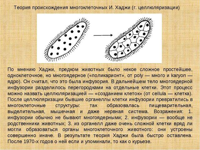 Теория происхождения многоклеточных И. Хаджи (г. целлюляризации) По мнению Ха...