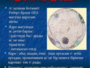 ЯДРО ЖӘНЕ ЯДРОШЫҚ Ядро қабықшадан, оның ішкі ортасын түзетін ортадан, хромати